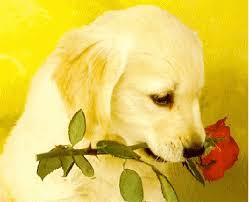 Ο σκύλος με το λουλούδι στο στόμα..