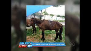 Bandidos roubam dois cavalos e um gavião na Suipa