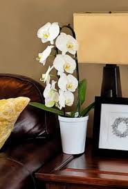 day orchid decor: make sure the temperatures around your orchid are between  and  degrees fahrenheit in the day and  and  degrees at night