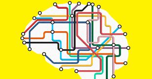 A Radical New Model of the <b>Brain</b> Illuminates Its <b>Wiring</b>   WIRED