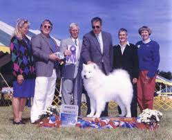 Mia, Best in Specialty Sweepstakes, Judge Ms. Carol Hjort Mokei, Potomac Valley Samoyed Club Specialty, 5 pt Major! - 11