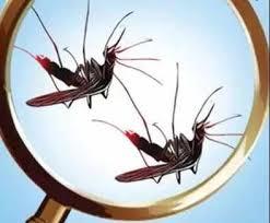 <b>Mosquito Killer</b> Machine: <b>Mosquito killers</b> and fly catchers to make ...