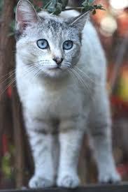 Re-Activated Cats (Long Bio) - Skyheart, Snowfire. Stoneclaw, Fadedstripe, Silversong, Echokit, Sweetkit, Squirrelfur and Tallshade Images?q=tbn:ANd9GcSSW5p7jTnQ9B5mhsprPf3_QYgZ74UT2FAr5aC2rYjzmItvHTQfvA