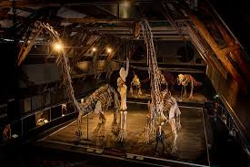 A <b>world of Dinosaurs</b> (Kalmar) - 2020 All You Need to Know ...