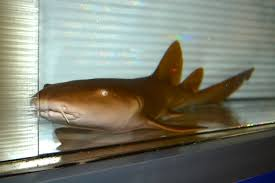 fish are friends not food what finding nemo taught me about nurse shark a buccal ventilator