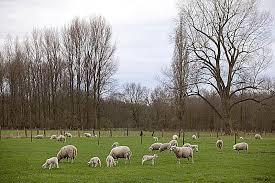 Lower Rhine region