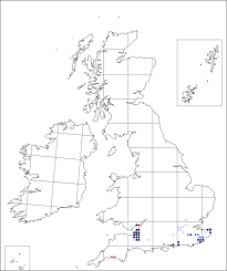 Wolffia arrhiza | Online Atlas of the British and Irish Flora
