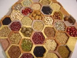 Resultado de imagem para sementes comestíveis para brotos
