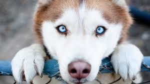 Самые преданные собаки в мире! Собаки верные друзья. Топ ...