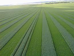 نتیجه تصویری برای image of wheat seed