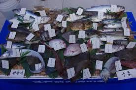 「青海魚」の画像検索結果