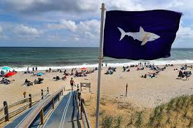 Cape Cod, <b>Sharks</b>, and a New Reality | BU Today | Boston University