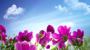 Hasil carian imej untuk 美丽的花朵
