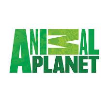 http://animal.discovery.com/