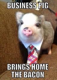 Funny Memes on Pinterest | Meme, Chemistry Jokes and Animal Memes via Relatably.com