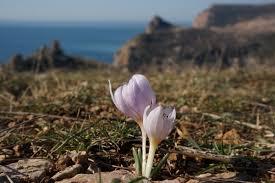 <b>Топ</b>-10 редких растений Севастополя | ForPost — Туризм
