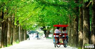 Image result for nami island korea
