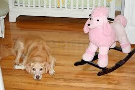 Κουίζ με σκύλους...