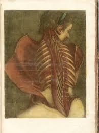 death science sexology joanna ebenstein of the morbid anatomy angel a