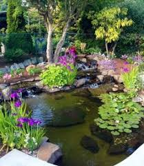 Small Picture Best Tips for Starting a Small Garden Pond Healthy water Water