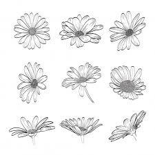 <b>Daisy</b> hand drawn collection | Премиум векторы