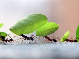 Resultado de imagem para Pense na Formiga