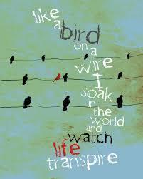 Like A Bird On A Wire / Inspirational Poetic / original ...