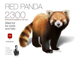 <b>RED</b> PANDA graphic <b>feel free</b> to share by memuco on DeviantArt