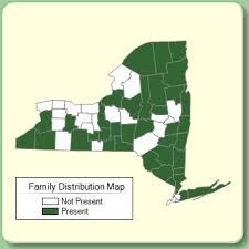 Isoetaceae - Family Page - NYFA: New York Flora Atlas - NYFA ...