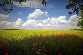 essay on spring season write descriptive essay on quot the spring seasonquot