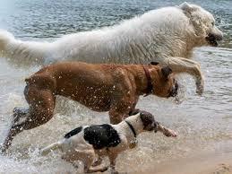 Η σκυλομαντεία του Αυγούστου...