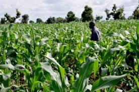Graduate Trainee at Aroms Farms Nigeria Limited Images?q=tbn:ANd9GcSVfXHNUWzzz3rIkAqk6eHbjQXvxOW3OZO7ZYhSLAdzgI3nRopN7A