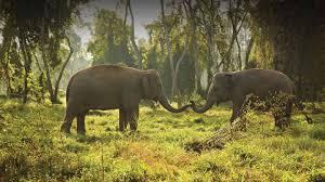 Chiang Rai Hotels | Anantara <b>Golden</b> Triangle <b>Elephant</b> Camp ...