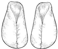 Меховые тапочки-сапожки. Обувь для дома своими руками
