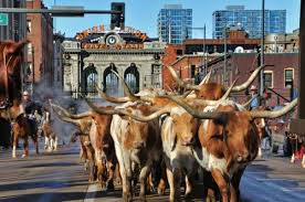 National Western Stock Show in Denver, Colorado