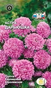 <b>Семена</b> СеДеК цветок <b>Астра Дарьюшка</b> карлкоролев., сиренево ...