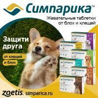 <b>Шампунь</b> Био-Грум для жесткошерстных пород собак, (<b>Bio</b>-<b>Groom</b> ...