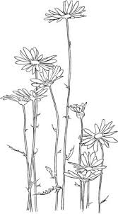 Frequent <b>daisy</b> coloring web page #coloring #common #<b>daisy</b> in ...
