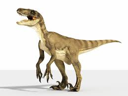 Image result for velociraptor image