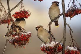 10 Berries That <b>Birds Love</b>