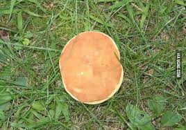 Mushroom disguises itself as pancake - http://geekstumbles.com ... via Relatably.com