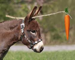 Image result for donkey chasing carrot + images