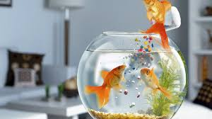 Image result for fish aquarium images