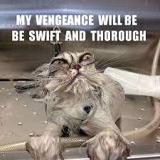 Vengeful cat - watch your back / legs. | Fetching Felines ... via Relatably.com