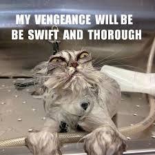 Vengeful cat - watch your back / legs. | Fetching Felines ... via Relatably.com