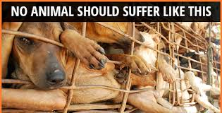 Image result for dog cruelty in vietnam