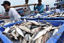 Hasil carian imej untuk nelayan malaysia
