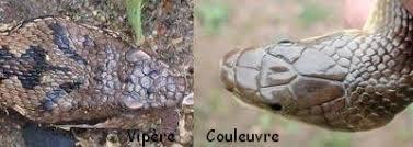 """Résultat de recherche d'images pour """"couleuvre"""""""