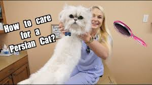 How To Care for a <b>Persian Cat</b>? - YouTube