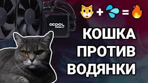 Кошка + водянка = | <b>Alphacool</b> Eisbaer LT240 - YouTube